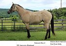 - Gelding in Indian Valley, VA