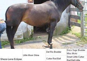 J A Quarter Horses Quarter Horse For Sale In Indian Valley Va