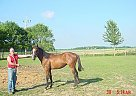 - Stallion in Cecil, OH
