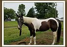 Paint Mare for Sale in Gallatin, Tennessee