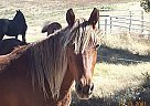 - Stallion in Sonoita, AZ