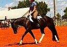- Gelding in Punta Gorda, FL