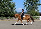 Warmblood Mare for Sale in Prince George, British Columbia
