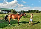 Chico - Gelding in Mt Perry, OH