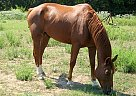 - Stallion in La Grange, TX