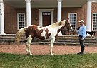 - Gelding in Tuscarora, MD