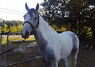 smokey - Gelding in Lawrenceville, GA