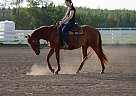 Lovin The Legacy - Gelding in Sherwood Park, AB