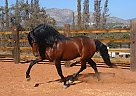 - Stallion in San Diego, CA