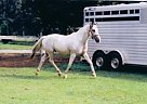 - Stallion in Chunchula, AL