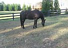 - Stallion in Canton, GA