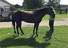 - Gelding in Eastcanton, OH