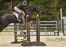 Messinwiththekid - Gelding in Chelmsford, ON