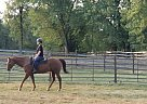 "Kid Terms ""Kid"" - Gelding in Big Flats, NY"