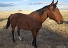- Stallion in Cheyenne, WY