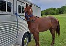 Jed - Gelding in Norwalk, OH
