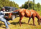 - Stallion in Gallant, AL