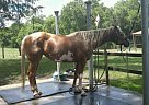 Dolly - Mare in Deland, FL