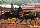 Sweet Pea - Mare in Gainesville, MO