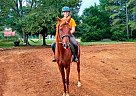 Churchill - Gelding in Advance, NC