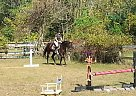 Thoroughbred Mare for Sale in Howell, New Jersey