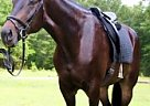 Other Gelding for Sale in Bay Minette, Alabama
