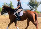Lady - Mare in Murrieta, CA