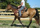 Quarter Horse Mare for Sale in Louisa, Virginia