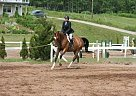 - Gelding in Greenwood, NS
