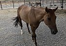 Missy - Mare in Morenci, AZ