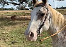 Tommy - Gelding in Anderson, TX