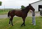 - Stallion in Van Wert, OH
