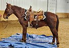 Chip - Gelding in Bemidji, MN
