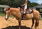 Quarter Horse Gelding for Sale in Prince Frederick, Maryland