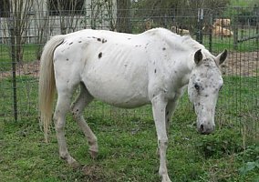 Appaloosa Horses for Sale in Texas TX - FREE Ads - HorseWeb
