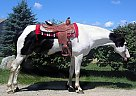 - Stallion in Pomfret Center, CT