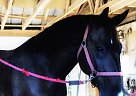ECHO - Gelding in Mechanicsville, MD