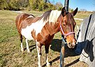 Quarter Horse Mare for Sale in Watertown, Tennessee