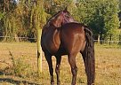 - Gelding in Grafton, OH