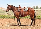 Dillon - Gelding in Las Vegas, NV
