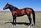 FivesAreLuckyToo - Stallion in Calhan, CO