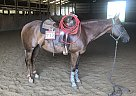 Look N Smart - Gelding in Hebron, IN