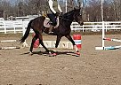 Thoroughbred Mare for Sale in Rock Creek, Ohio