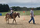 Ace - Gelding in Centerburg, OH
