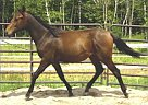- Stallion in Guelph, ON