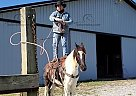 Comanche - Gelding in London, KY