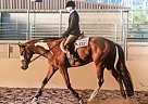 - Gelding in Redlands, CA