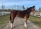 Jack~Rabbit - Gelding in EdenValley, ON