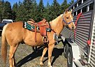 - Gelding in Sandy, OR