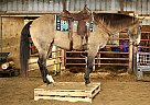 RUGGED - Gelding in Valley Springs, SD